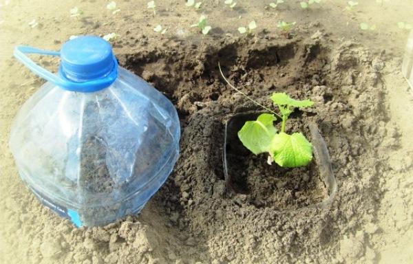 Пластиковые бутылки для огорода