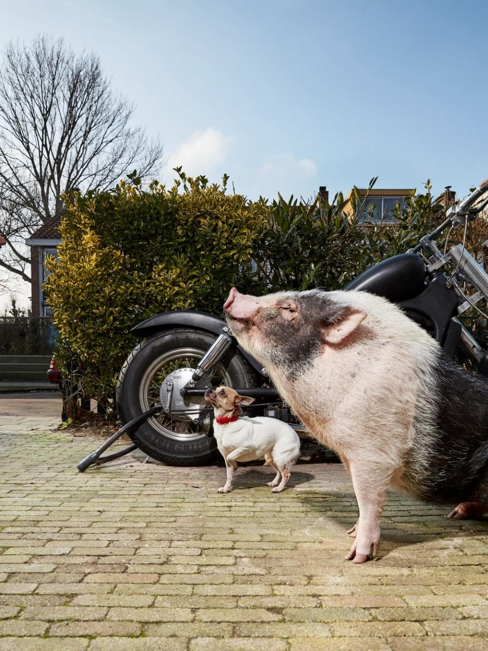 Портреты амстердамских домашних животных. Фотограф Изабелла Розендал 7