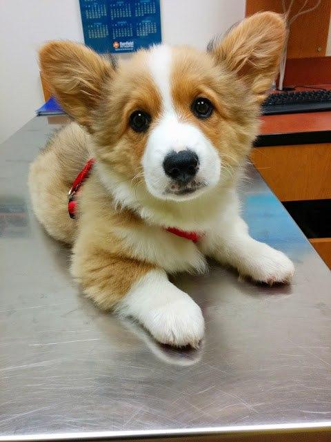 самые милые щеночки в мире