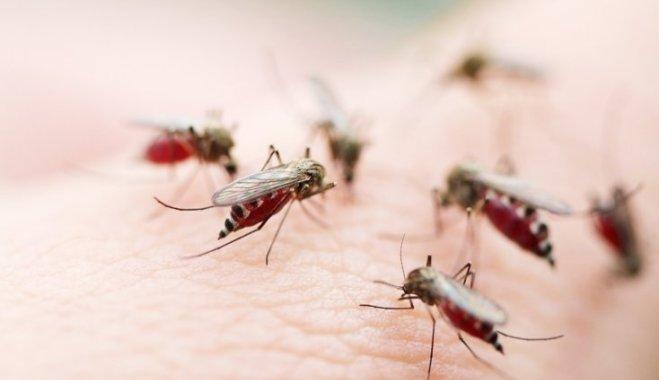 Защита от комаров: 8 простых способов