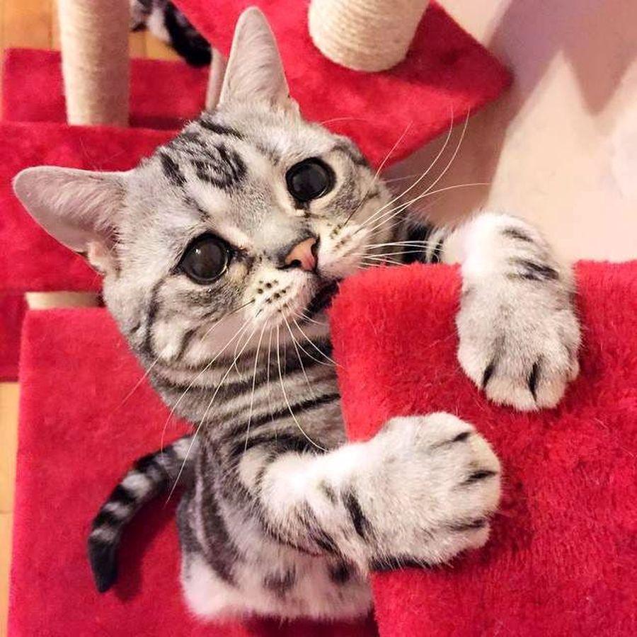 Самые смешные картинки мира с кошками, для невестки день