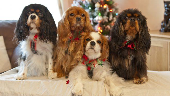 Три породы собак, которые обрели историческую популярность в британском королевском семействе