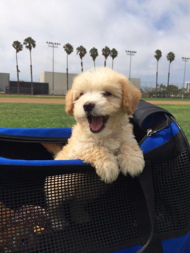 самые милые щеночки в мире (16)