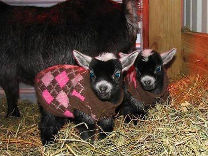 Малыши в жилетках животные, смех, снимок