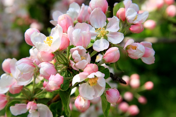 Вредители в саду весной