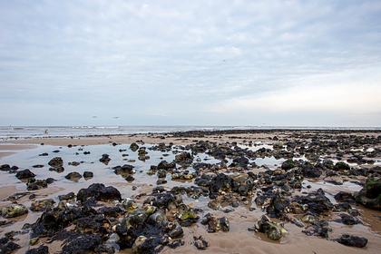 На британском побережье обнаружили обезглавленных тюленей