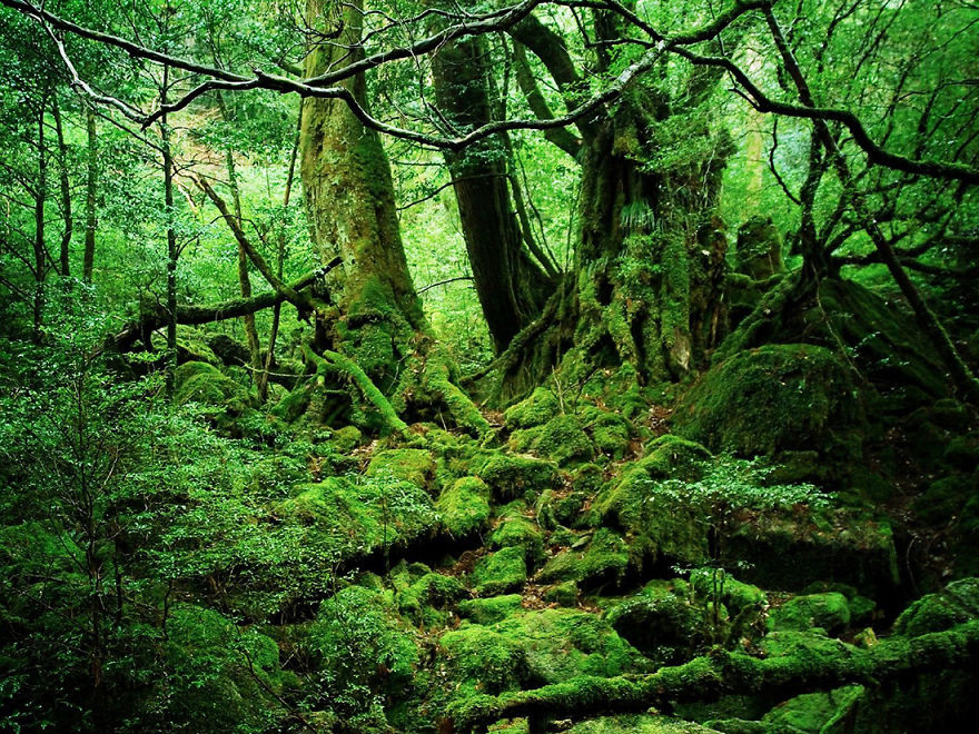 18. Якусима, Япония красота, пейзажи, природа