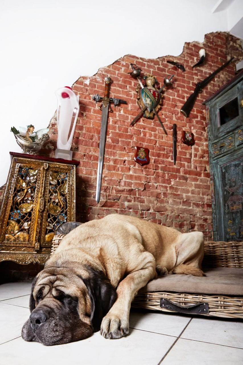 Портреты амстердамских домашних животных. Фотограф Изабелла Розендал 9
