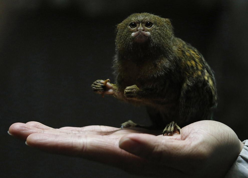 Самые маленькие животные картинка