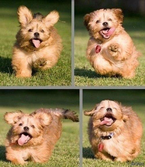 Абсолютно счастливая собака :)