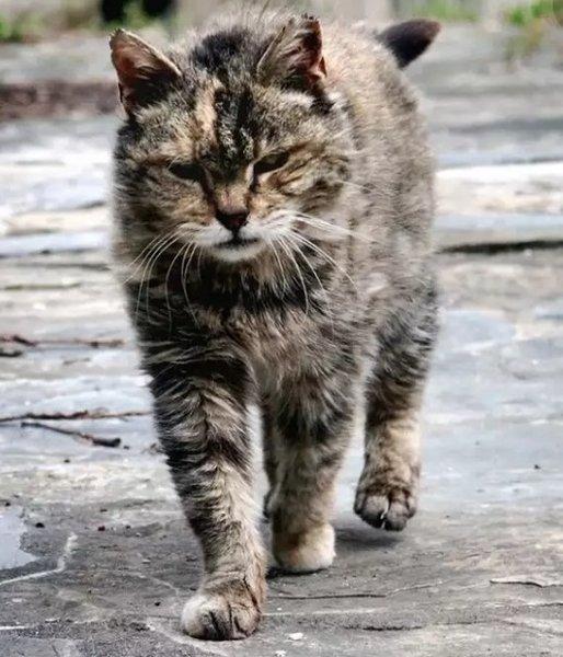 К сожалению фотографии Борьки у меня нет. Этот кот очень похож.
