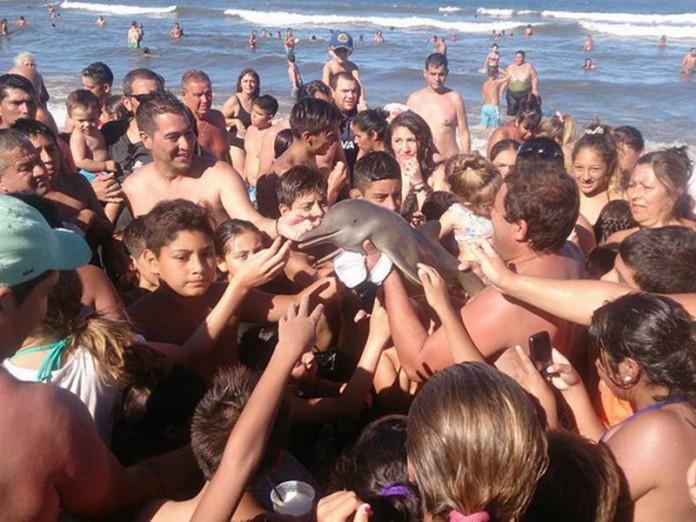 Детеныша дельфина убили тури…