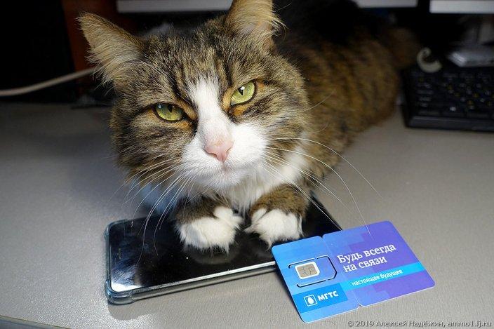 Свершилось!  Бесплатная мобильная связь и мобильный интернет в РФ  МГТС,Мобильная связь,мобильный интернет,связь