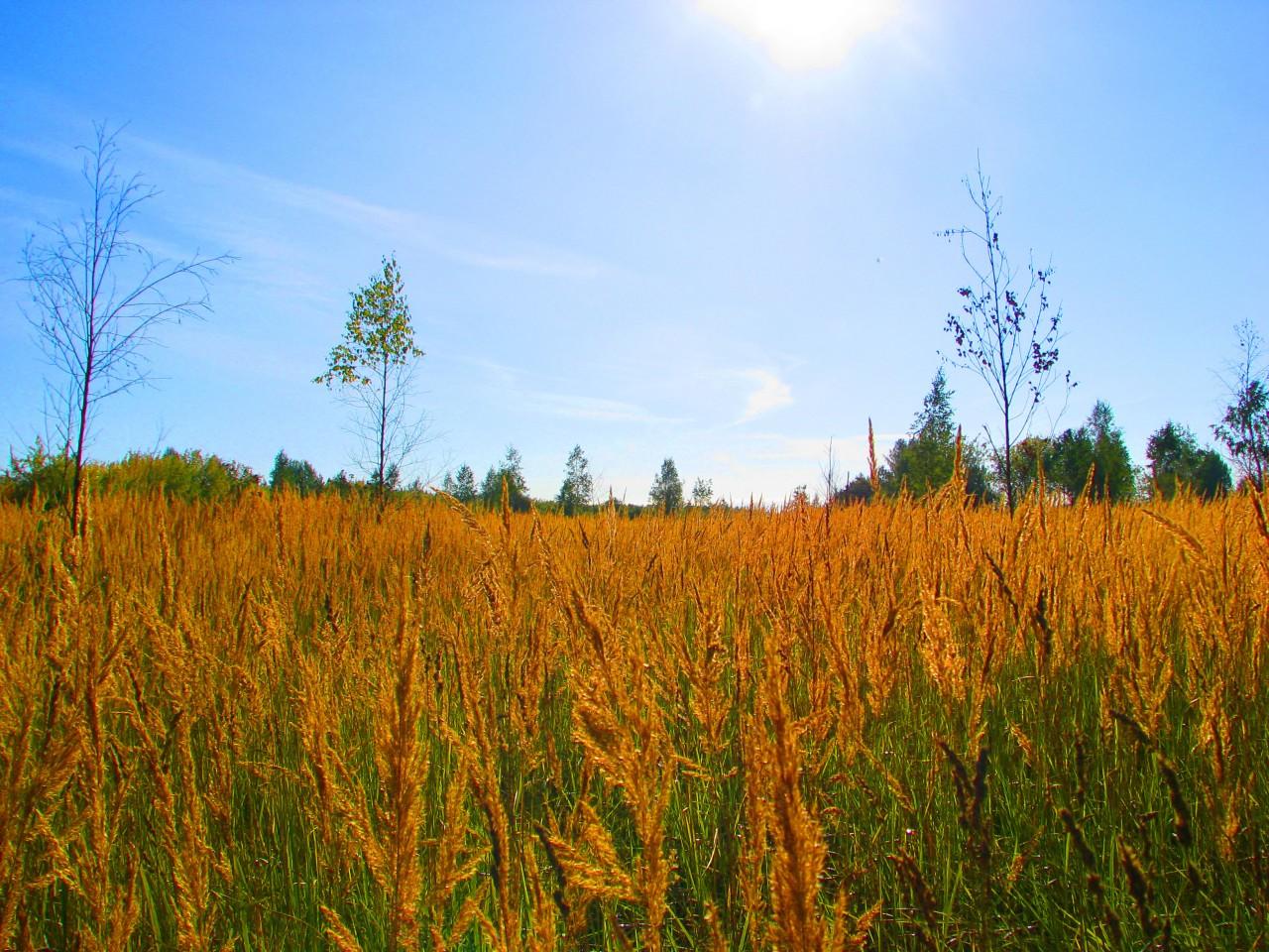 Красоты природы: бальзам для души