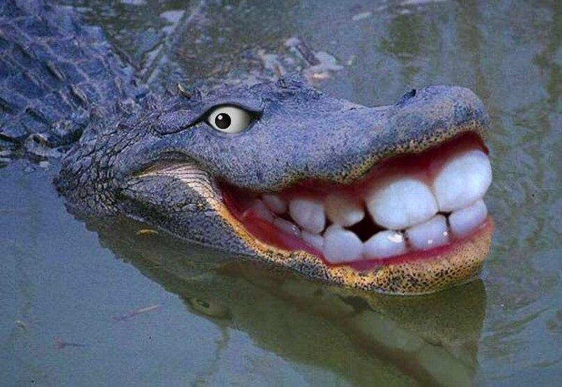 Картинки с крокодилами приколы, картинка