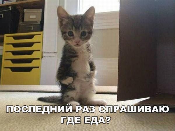 Пятничные котики сегодня в срок!