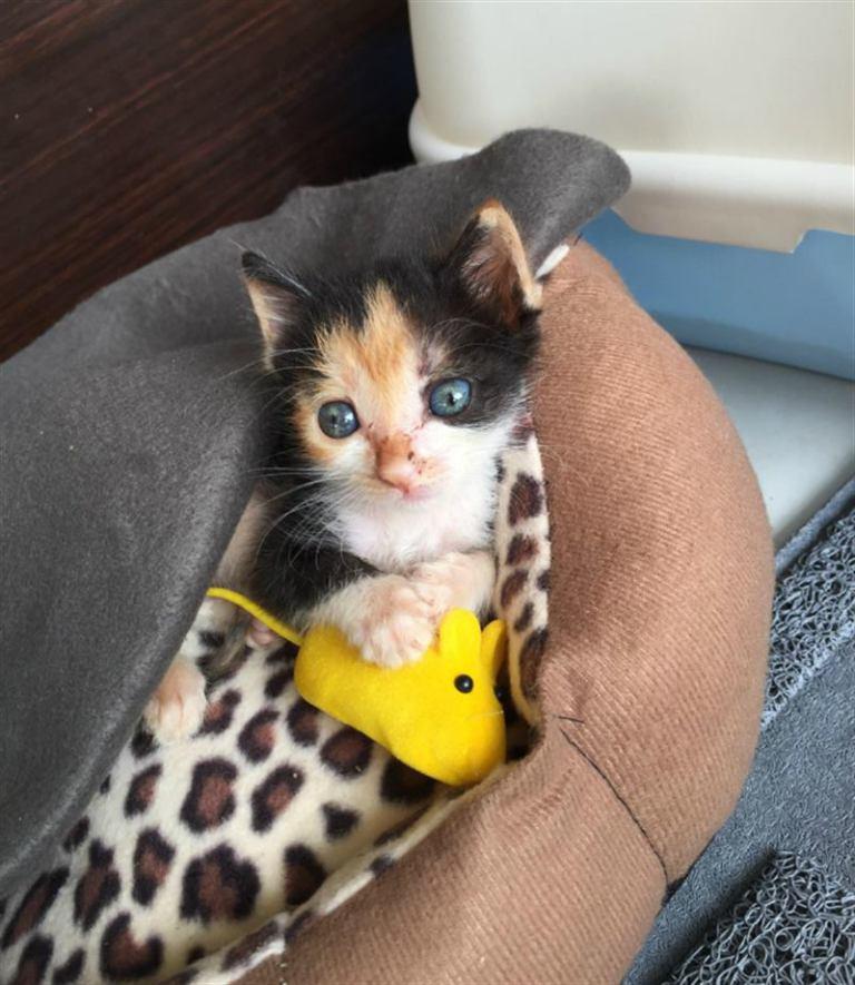 Брошенный неприглядный котенок превратился в прекрасную кошку!