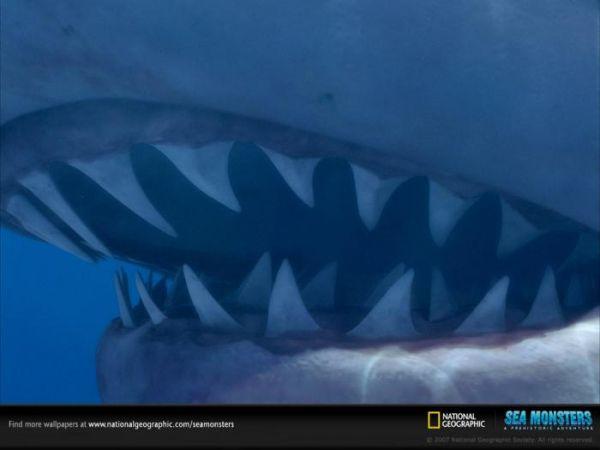 Океанические монстры (15 фото)