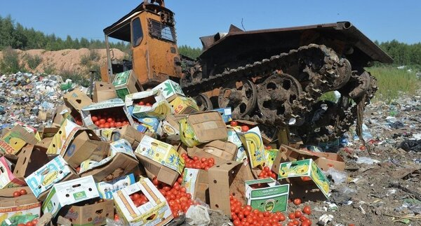 Белоруссию поймали на реэкспорте запрещенных овощей и фруктов в Россию новости,события
