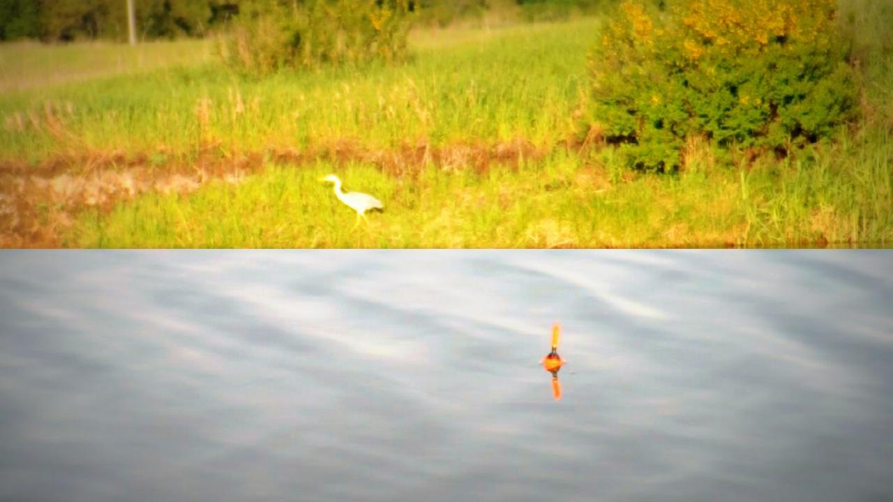 Рыбалка на поплавок. Поклевки плотвы