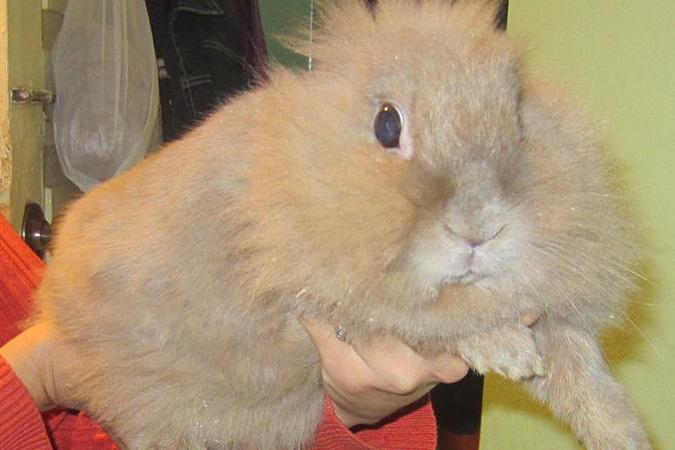 Чудесное спасение воронежской семьи: кролики - это не только ценный мех...