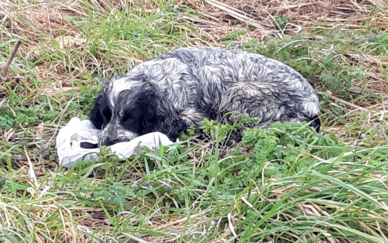 Он нашел в канаве брошенную …