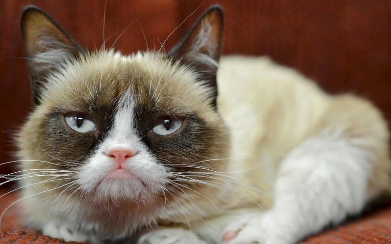 Как ваша кошка пытается с вами поговорить кошки, кошка, когда, является, помощи, урчание, довольно, могут, склонны, самом, глаза, кошек, тереться, сказать, группы, Когда, собираются, возвращаются, одичав, Наверно