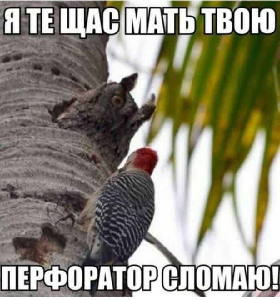 https://mtdata.ru/u25/photo150F/20005211016-0/original.jpeg#20005211016