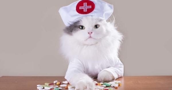"""Рубрика """"Вопрос-ответ"""". Коты  и процедуры."""