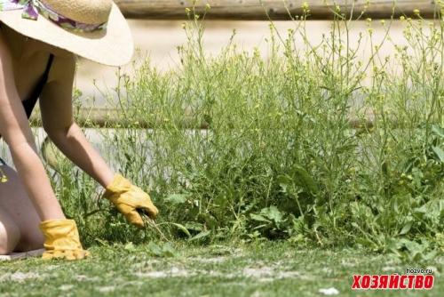 Сорняки подскажут, что участок пригоден для овощей
