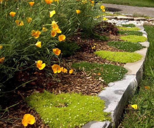 Растения для озеленения садовых дорожек и ступеней