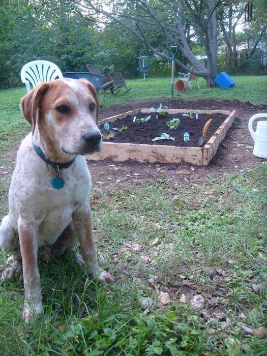 С компостом нужно соблюдать технику безопасности.