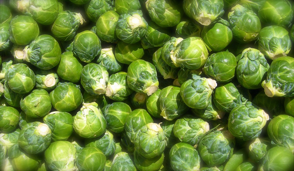 Если вы однажды вырастили брюссельскую капусту, то уже никогда не откажетесь от нее