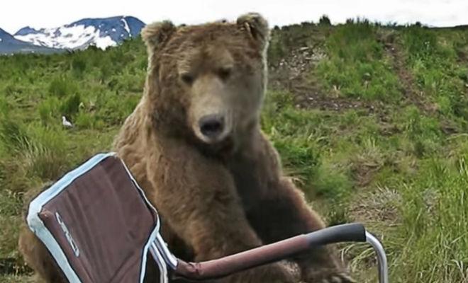 Медведь пришел к рыбаку