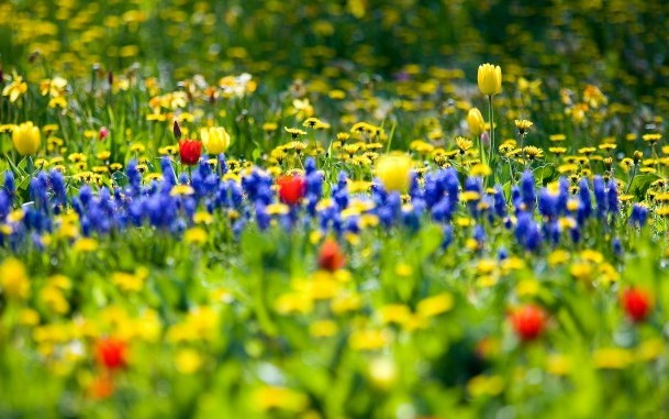 Обои для рабочего стола цветы весны