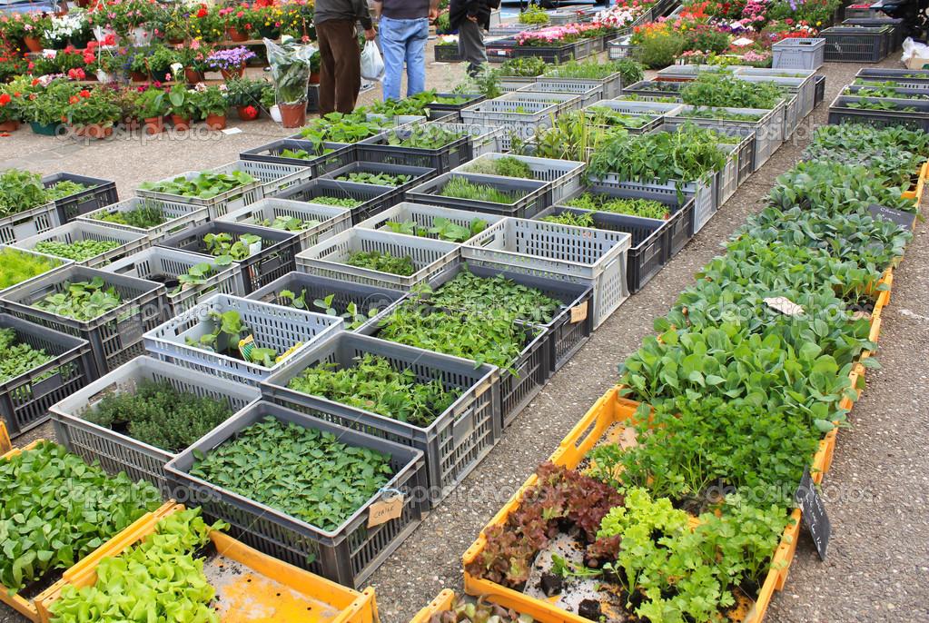 Как правильно выбрать рассаду на рынке