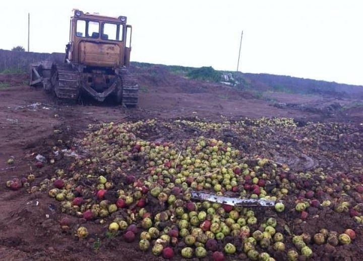 Война с яблоками: во Владивостоке ликвидирована партия польских яблок