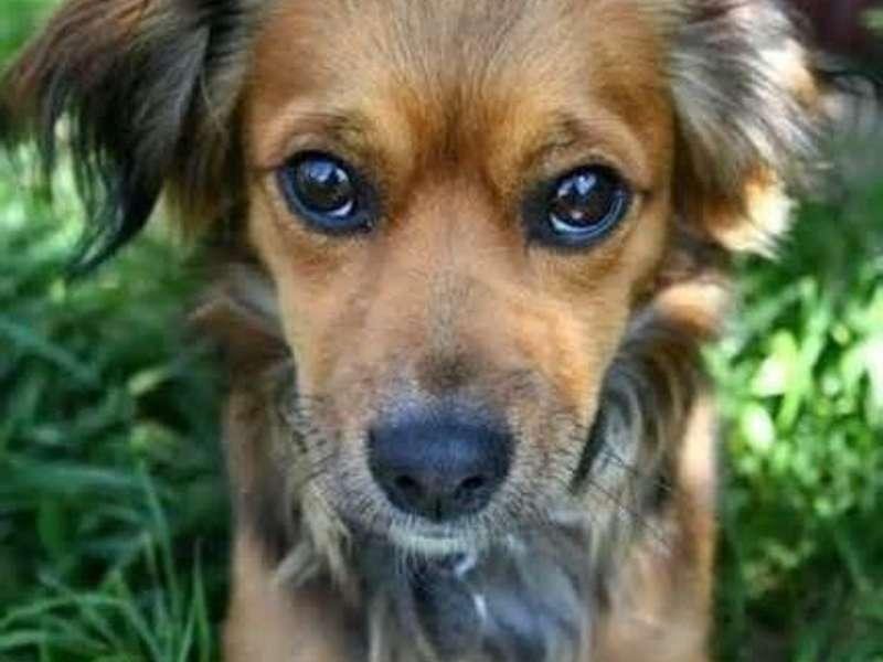 Как помочь собаке, если она съела яд на улице!