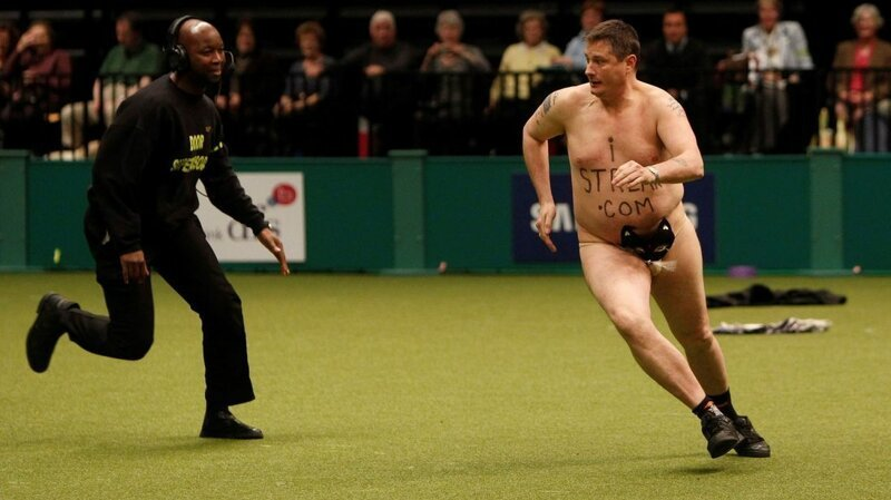 Охранник догоняет Робертса на собачьей выставке Crufts 2010 Популярность, в мире, истории, история, люди, спорт, стрикер, футбол
