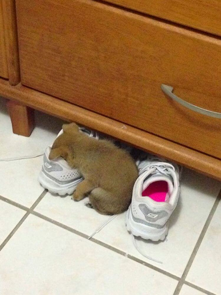 30 фото потрясающих щенков, которые могут уснуть где угодно и как угодно