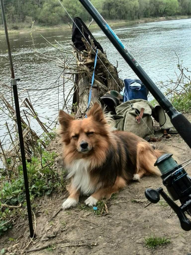 Халк. История одного пса бездомная собака, животные