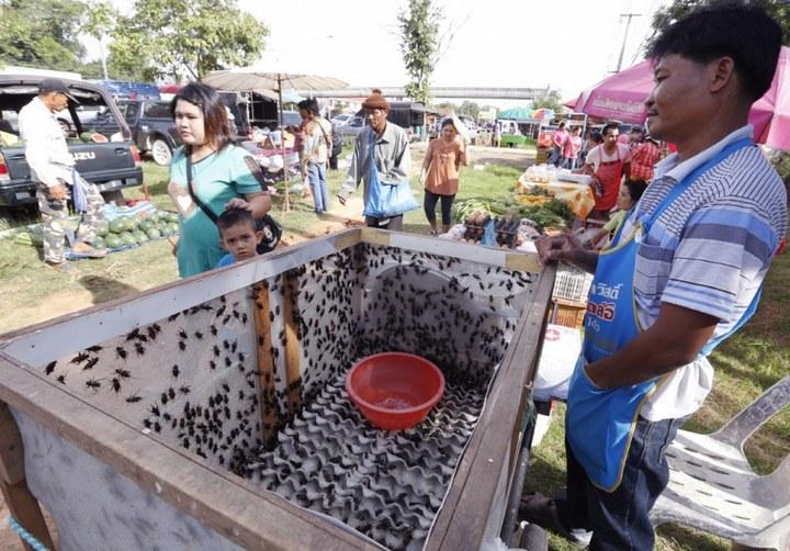 Как в Таиланде разводят съедобных насекомых