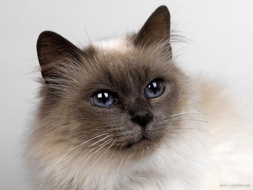23 фотографии красивейших любимых кошек