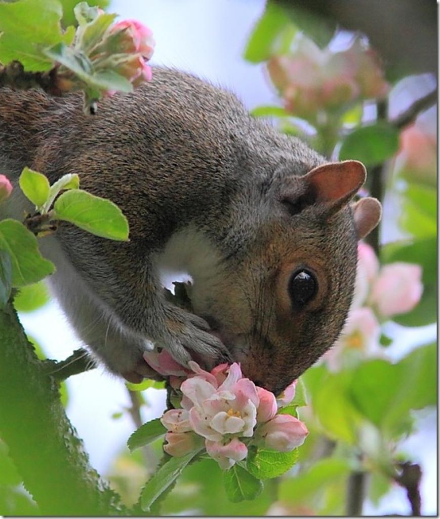 Смешные картинки про весну с животными
