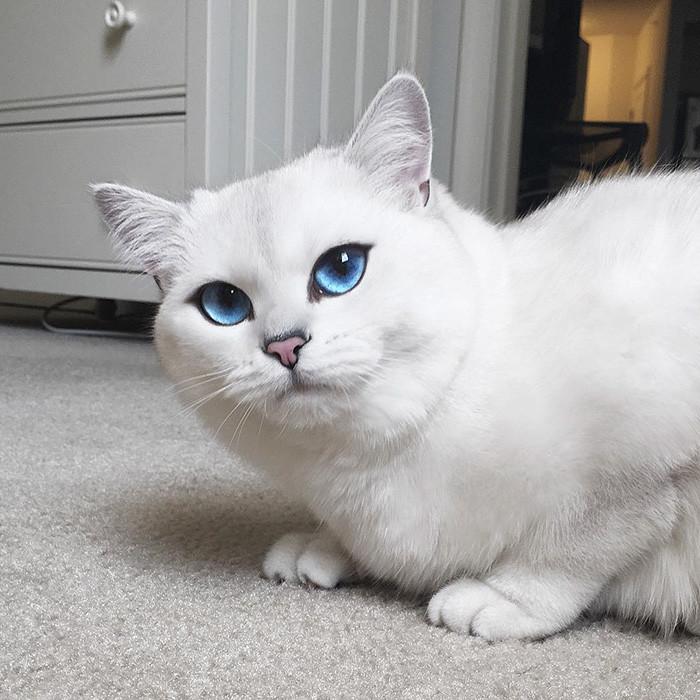 сибирского фото самого красивого кота в мире дом такие вредители