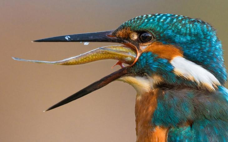 Животный мир в фотографиях