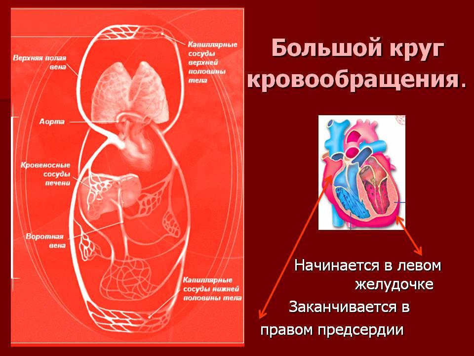 Супер средство: капли для идеальной циркуляции крови