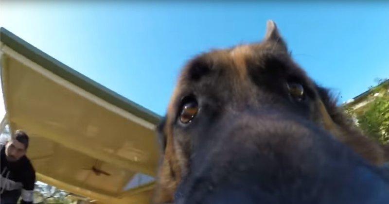 Собака стащила у хозяина кам…