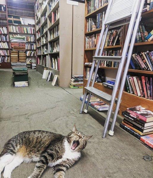 11 кошек, живущих в библиотеках в окружении книг