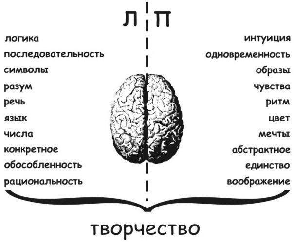Развиваем мозг: различие полушарий мозга